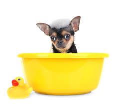 Le bain du chien